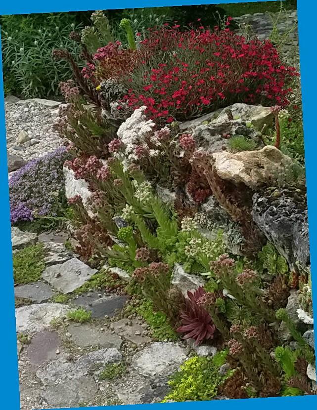 Какие цветы посадить на кладбище фото